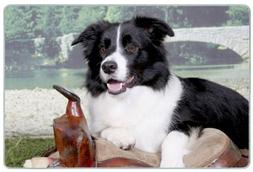 Canine Designs Border Collie Tempered Glass Cutting Board -