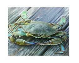 """Blue Crab"" Tempered Glass Cutting Board for Kitchen Shatter"